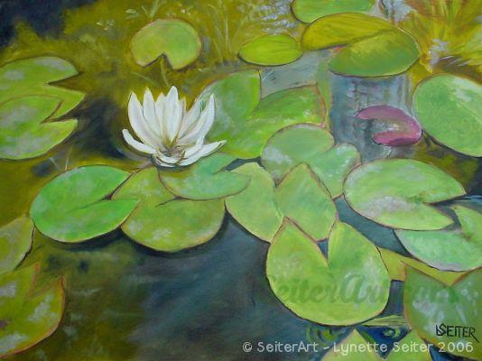 Lilly Pads in My Pond